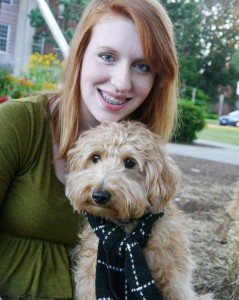 Labradoodle, puppies, standard, Oregon, for sale, red, black, Washington