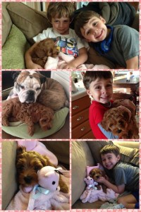 Penny at home with her new family.