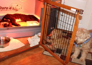 Fourth day, older dogs keep watch outside pen