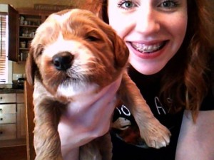 Labradoodle puppy breeder in Oregon with pups available.