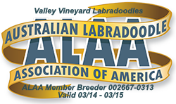 Valley Vineyard Labradoodles ALAA Logo