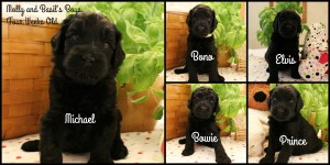 four-weeks-old-collage-boys