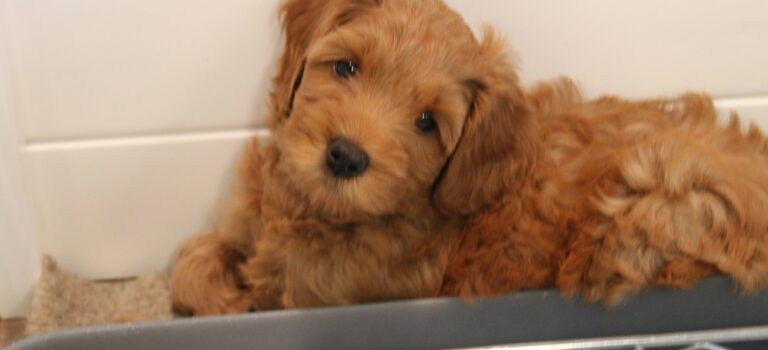 """Emma and Barkley's 2021 """"E"""" Litter is home"""