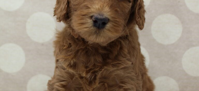 Bella and Barkley's pups are here!