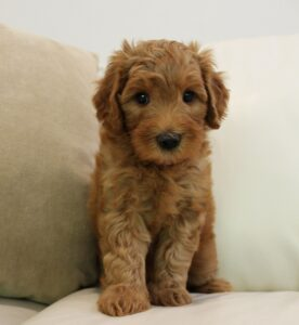 Summer and Fall puppy spots available